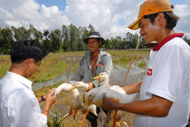 Mekong Delta focuses on disease prevention in animals