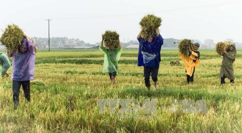 Hà Tĩnh gets seeds for new crop