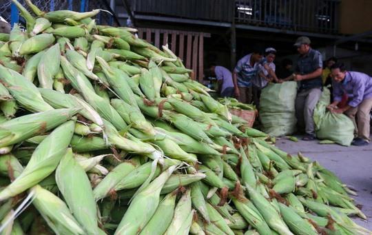 Towns top corn market