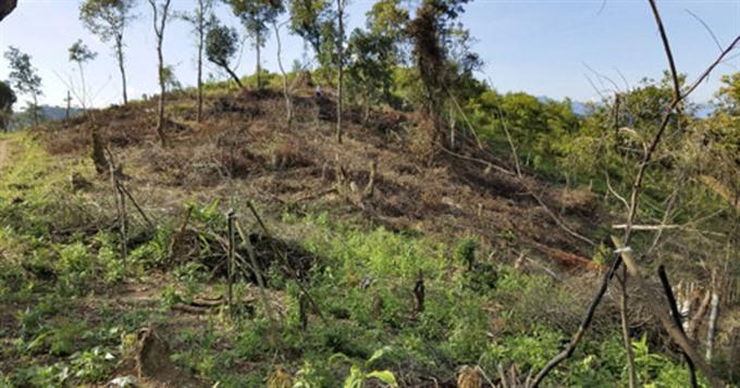 Struggle to manage Mường Phăng forest