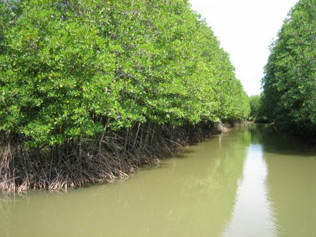 Cà Mau moves to protect coastal forests