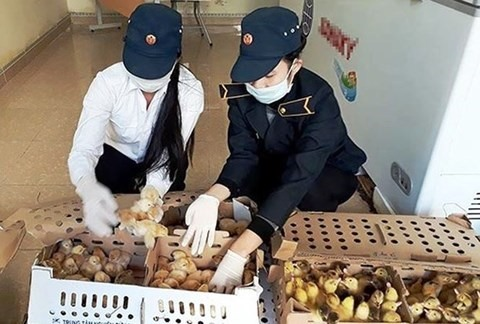 Police seize 1300 unclear-origin poultry in Nghệ An
