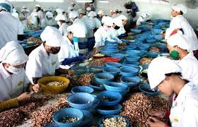 VN wants Cambodia to grow cashew