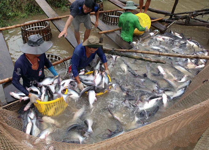 Tap Asia tra fish exporters told
