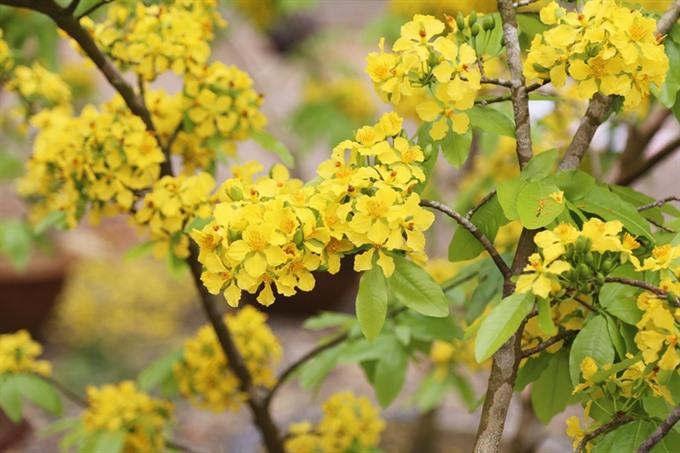 Quảng Ninh to host flowers festival next month