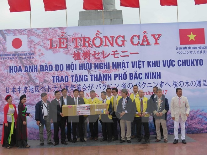 Japanese-presented cherry trees planted in Bắc Ninh