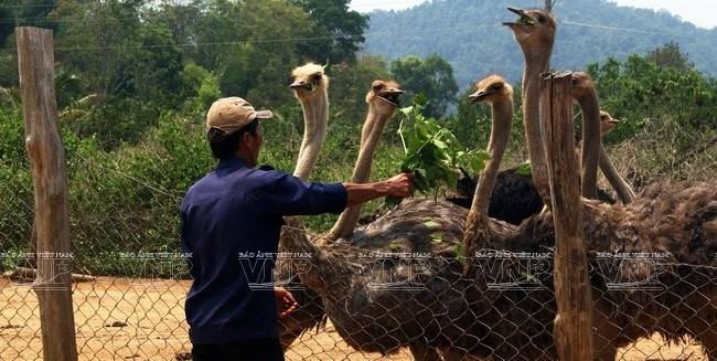 Lâm Đồng to invest over US510 billion to biodiversity protection
