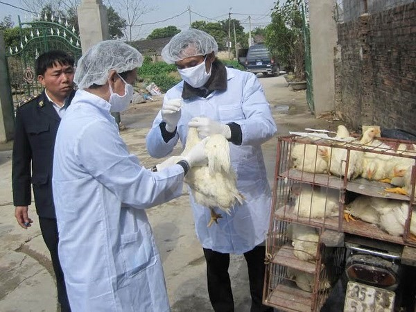Tây Ninh acts to prevent bird flu outbreak