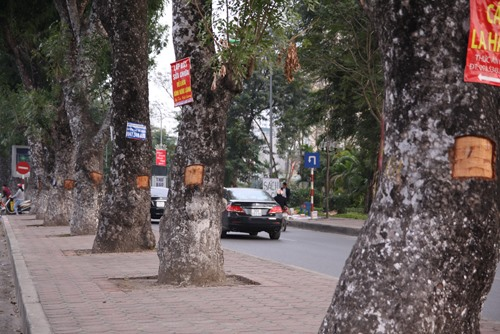 Miscreants damage trees on Láng Road