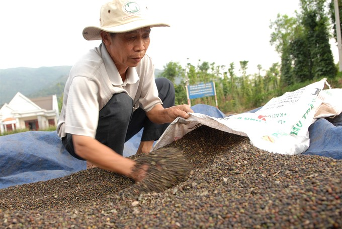 As highlands pepper prices fall farmers hold out