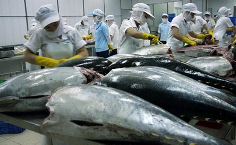 Vietnamese tuna exports hit by Japans import tariff