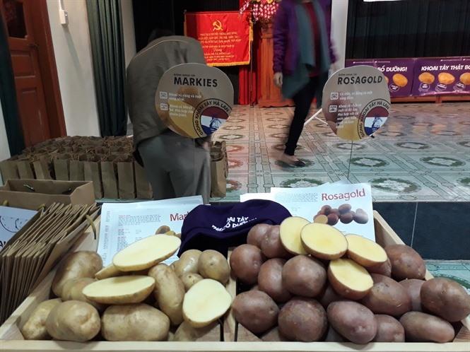 Việt Nam seeks Netherlands assistance in agriculture sector
