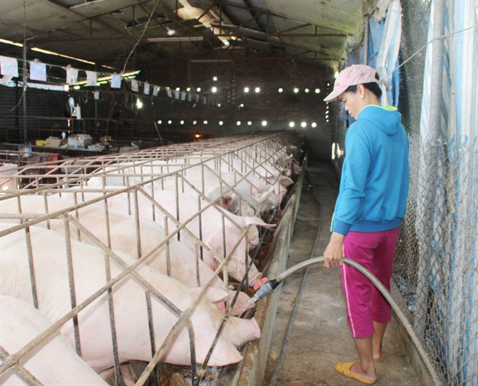 State Bank to aid pig farmers