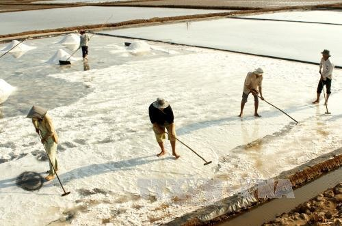 Bạc Liêu salt prices rise sharply