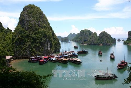 Six damaged boats stop operating in Hạ Long