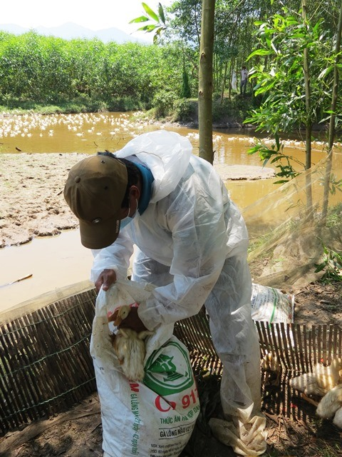 Huế reports its first avian flu outbreak