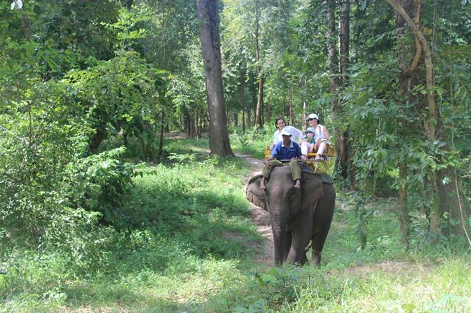 On a wild trek to meet tame elephants