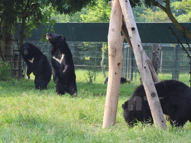 Bear necessities: new dens for rescued bears