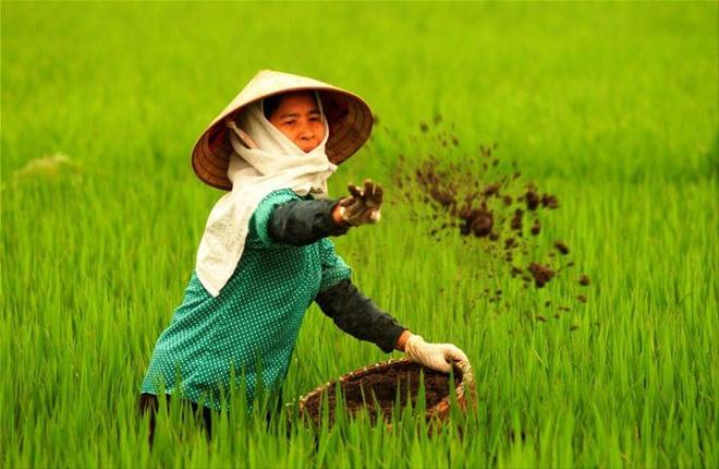 Sharp rise in Q1 fertiliser imports