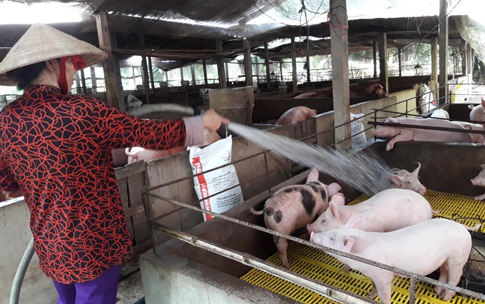 MARD urges husbandry firms to save pig farms