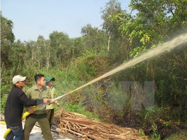 11000ha of Cà Mau forest at fire risk
