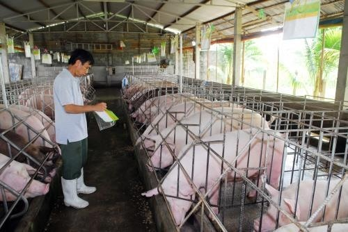 Đồng Nai aims to save pig farming industry