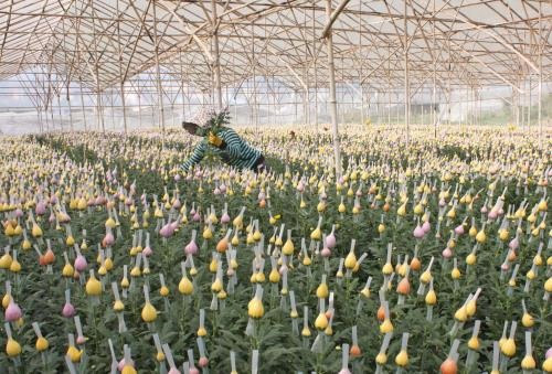 Japanese flower firm to invest in Đà Lạt