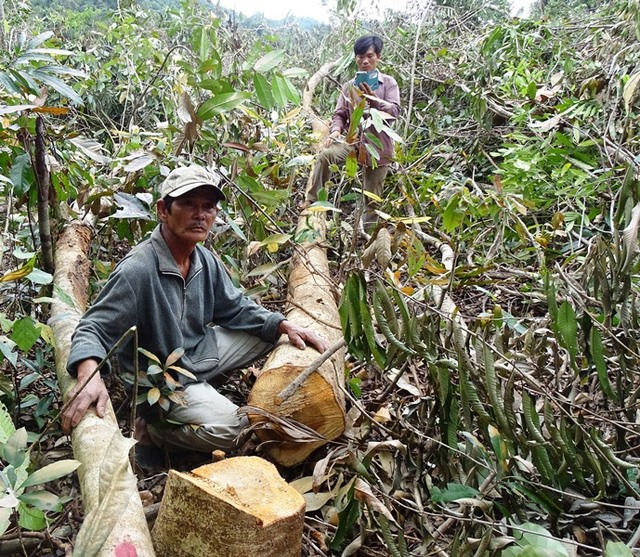 Ministry to inspect deforestation in Phú Yên