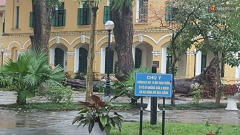 Hà Nội authorities ask to review trees at schools