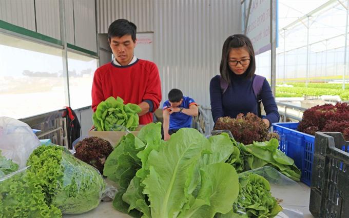 Farm tours in Đà Lạt attract tourists