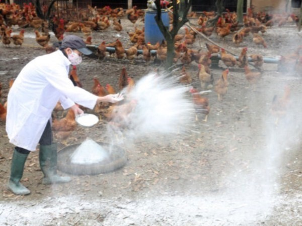 Ministry announces Việt Nam free of bird flu