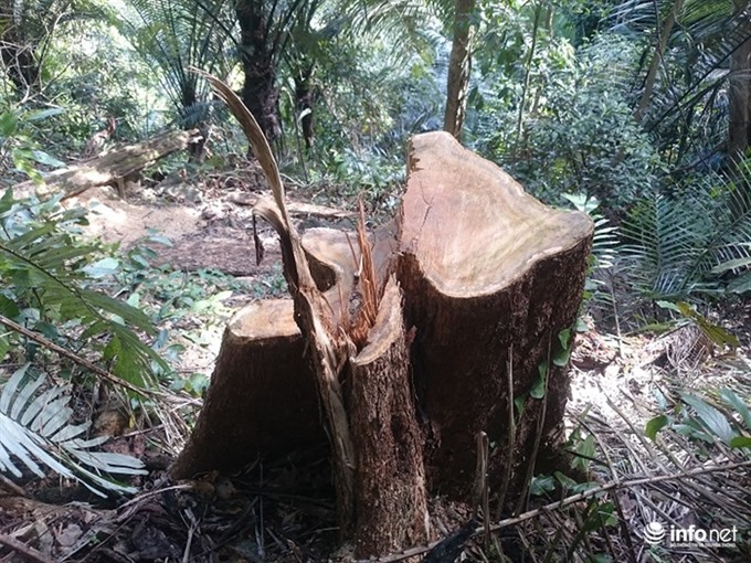 Trees logged illegally in central nature reserve