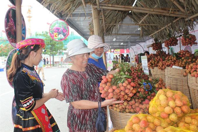 Lychee week kicks off in Hà Nội