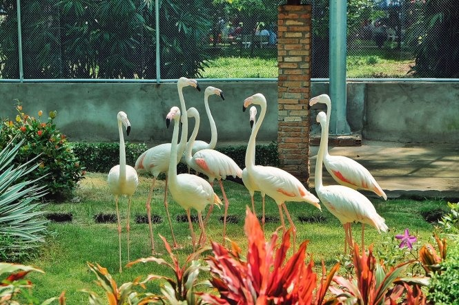 Sài Gòn Zoo opens flamingo garden water park