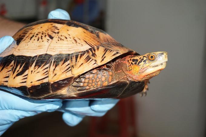 Germans help rare turtles in northern park