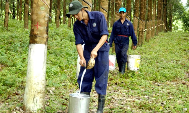 Rubber plantations urged to obtain certification