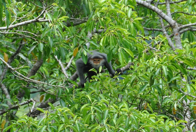 Two provinces protect primates from peril