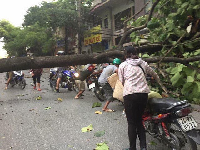 Typhoon Hato: Strong winds damage houses uproot trees
