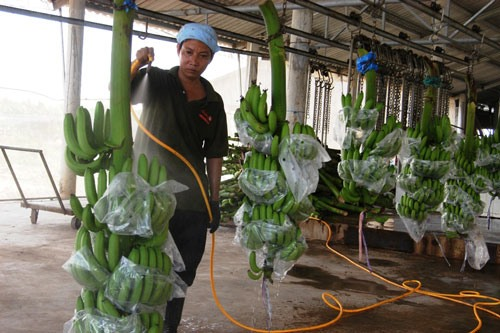 VN looks to increase exports to Middle East