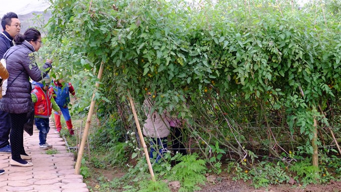 Organic farms turn back the clock on market gardening