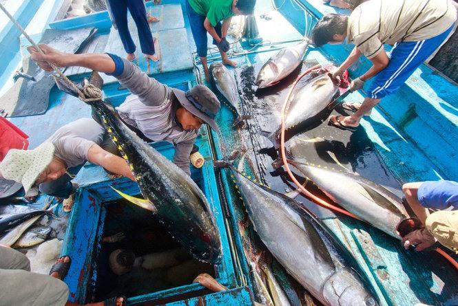 Tuna export revenue surges 21%