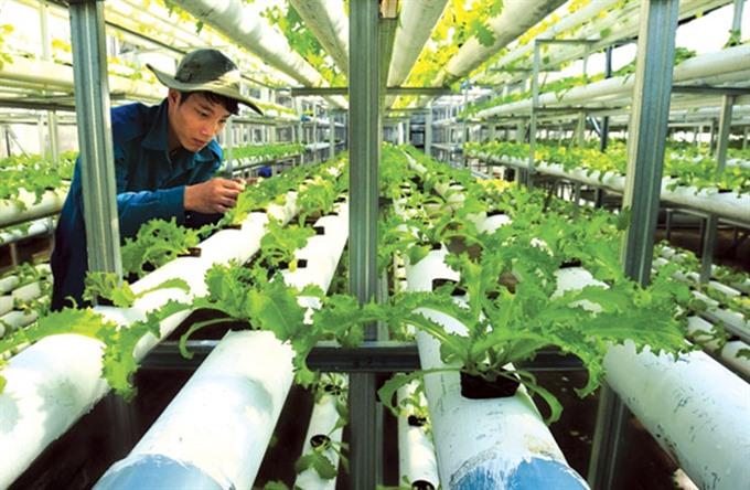 Tiền Giang develops hi-tech agricultural park