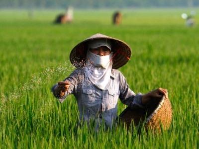 DAP fertiliser prices rise sharply
