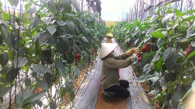 Lâm Đồng farmers go high tech