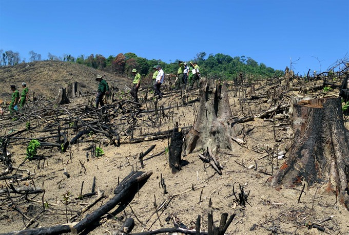 Wood from devastated natural forest found in wood-chip factory