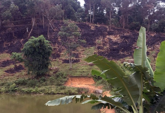 Authority confirms serious deforestation in Điện Biên