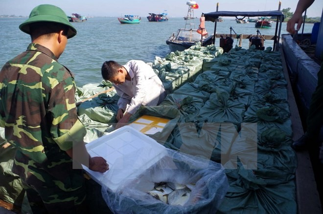 Quảng Ninh detains people for illegally transporting fish