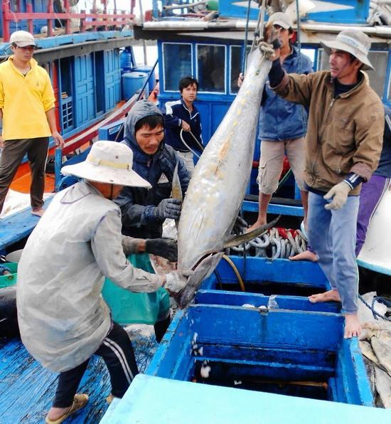 Bình Định boat hauls in 1.1 tonnes of tuna in off-season