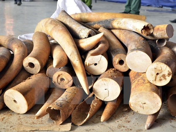 Probe into ivory theft by customs officer