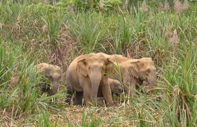 Lack of care leads to elephant rampages